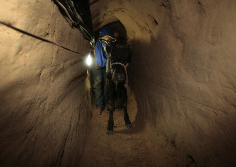 A Palestinian smuggler pushes a calf through a tunnel beneath the Egyptian-Gaza border on October 24, 2008. (REUTERS/Mohammed Salem)